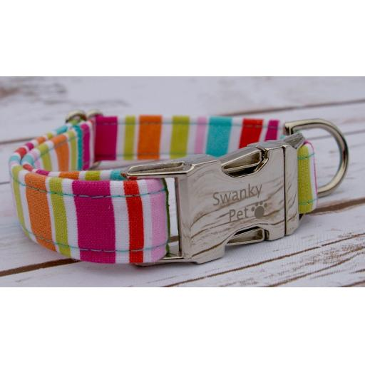 Dog Collars for all seasons