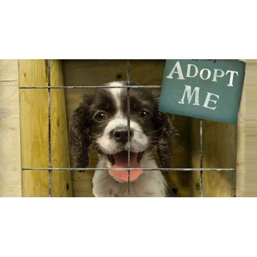 Myths and Facts surrounding Dog Adoption