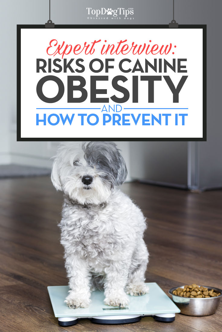 Keeping Your Dog Fit Not Fat