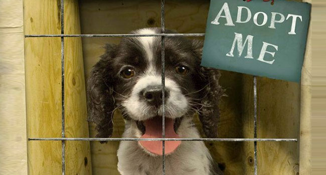 Myths and Facts surrounding Dog Adoption