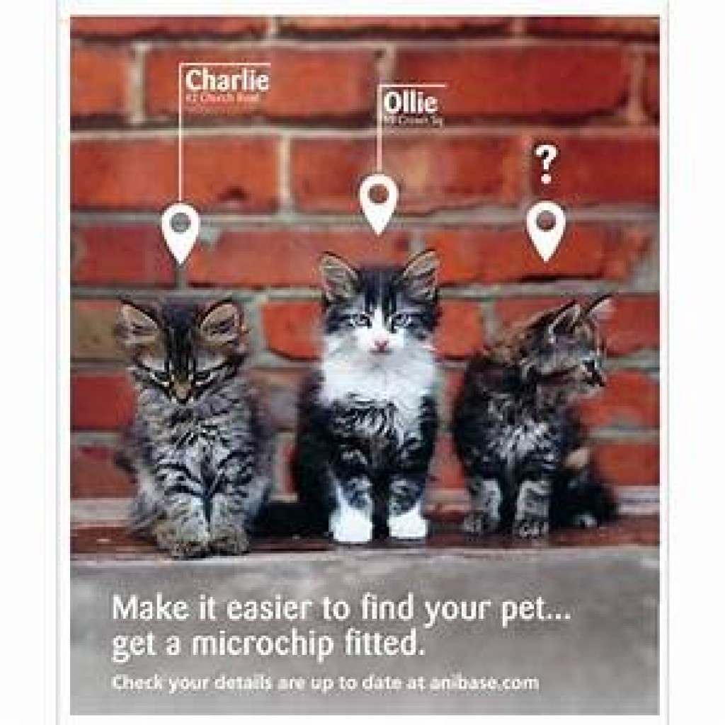 Micro Chipping and your dog -  A Dog Collar Boutique Blog guide